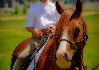 Horses 27